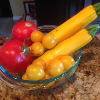 GOLDEN zucchini, RED and YELLOW tomatoes from Meyers Farm!
