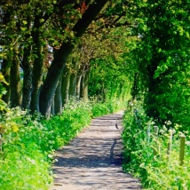 Just a path...